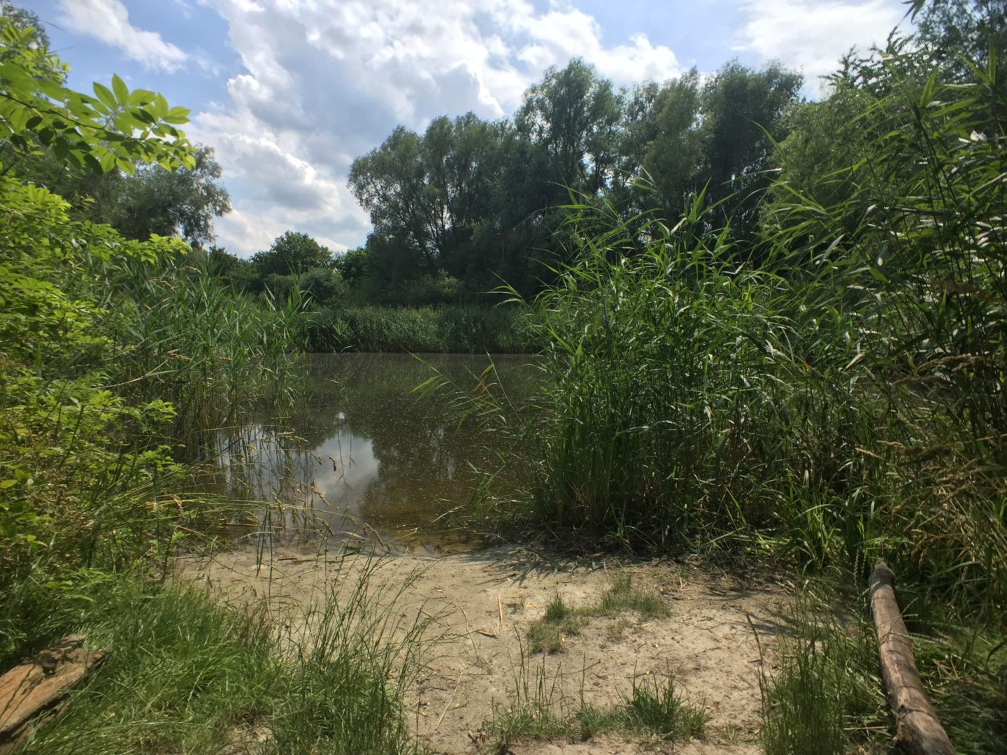 The pond called Rthepfuhl in Mariendorf, a district of Berlin. The pond is surrounded by trees and thick vegetation. A patch of sand is in the foreground. The pond water is cold and murky. The sun is shining by there are fluffy clouds in the sky.
